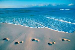 Florida tracks